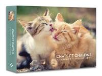Chats et chatons : l'agenda-calendrier 2018