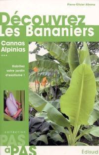 Découvrez les bananiers