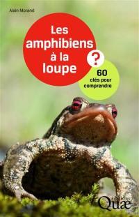 Les amphibiens à la loupe ?