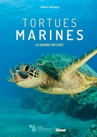 Tortues marines