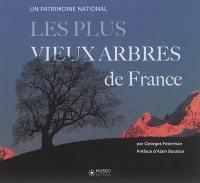 Les plus vieux arbres de France : un patrimoine national
