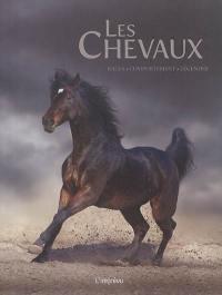 Les chevaux : races, comportement, légendes
