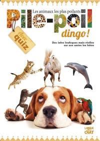 Pile-poil dingo ! : les animaux les plus poilants : des infos loufoques mais réelles sur nos amies les bêtes